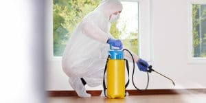 black mold remediation 2