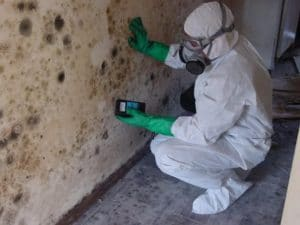 mold remediation1